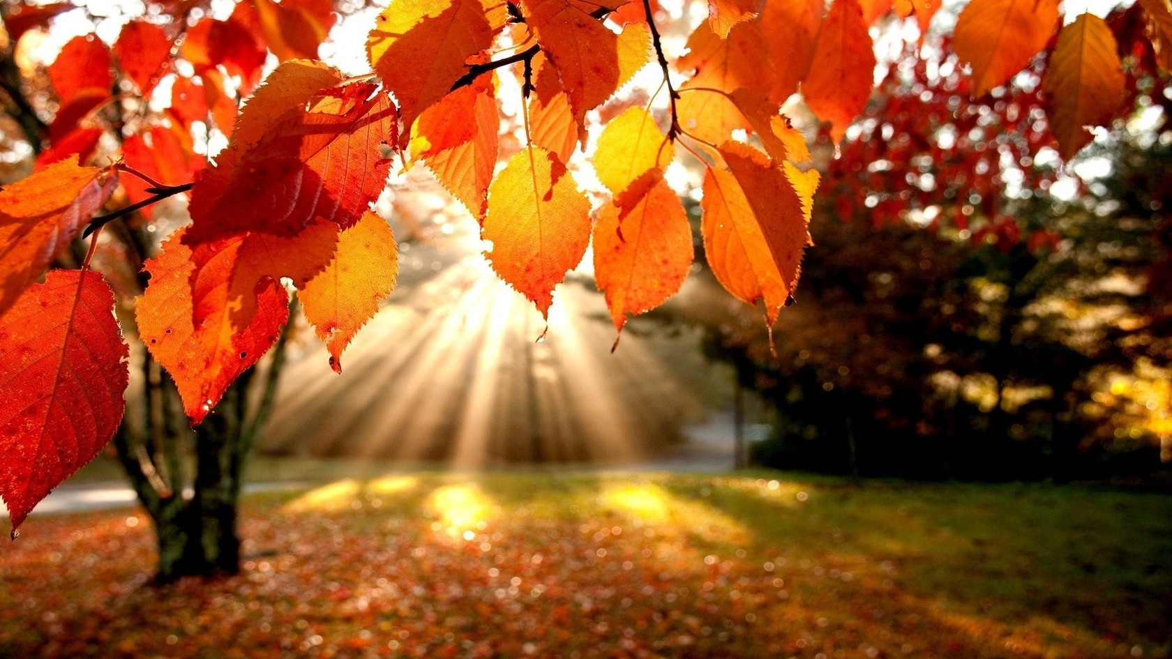 2016 First Day of Fall Quotes - 20 Best Autumn Sayings & Leaf Quotes