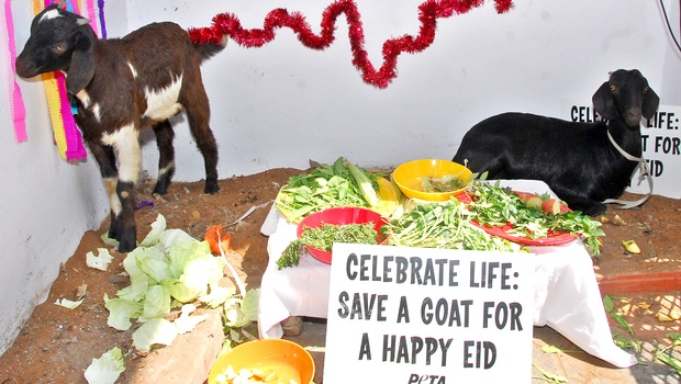 Why Animal Killing is always condemned on Eid-ul-Zuha, But not on 'Durga-Puja' and 'Gadhimai Festival' ?