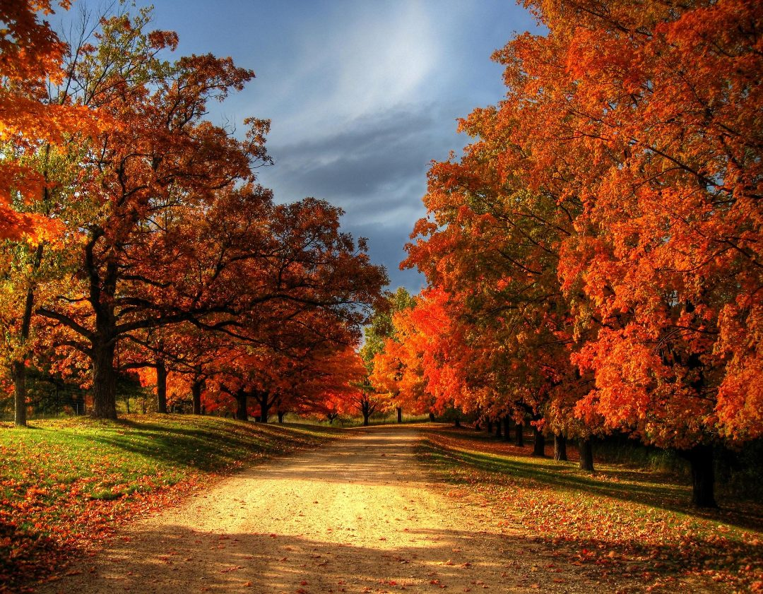 Best Fall Quotes To Fill Your Autumn Season With