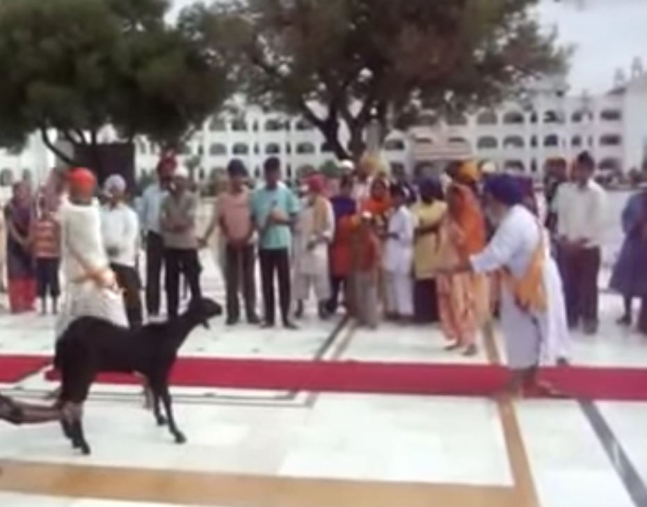 goat slaughter in gurudwara