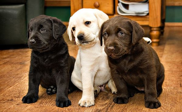 New Dog breeding rules: doing breeding without registration is prohibited, says Center